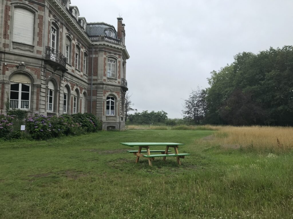 Afbeelding met gras, buiten, veld, groen  Automatisch gegenereerde beschrijving